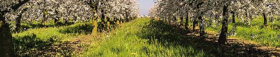 produtos agrícolas
